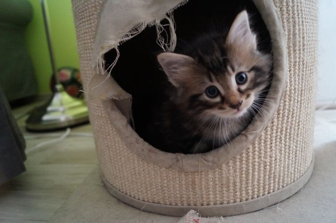 kitten_21