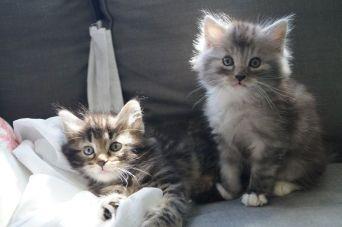 kitten_25