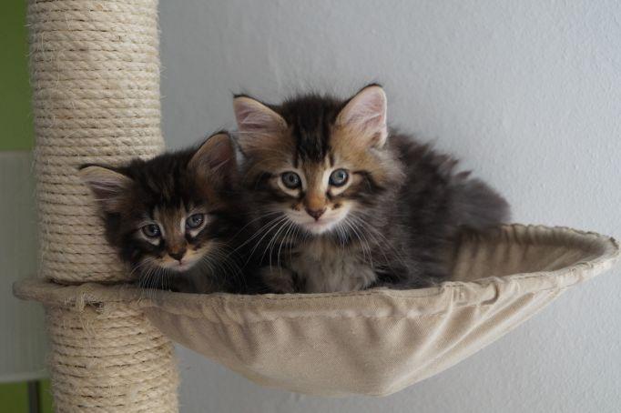 kitten_26