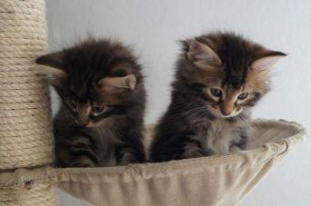 kitten_28