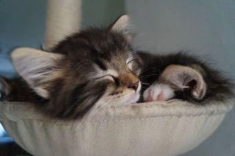 kitten_30