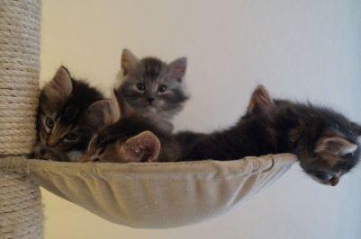 kitten_32
