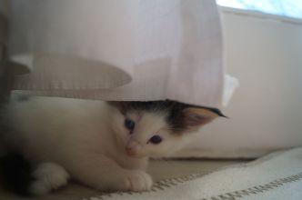 Felino (2)