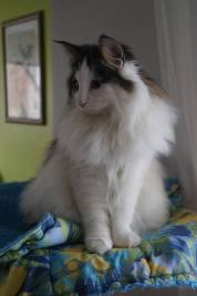 Freya mit 8 Monaten